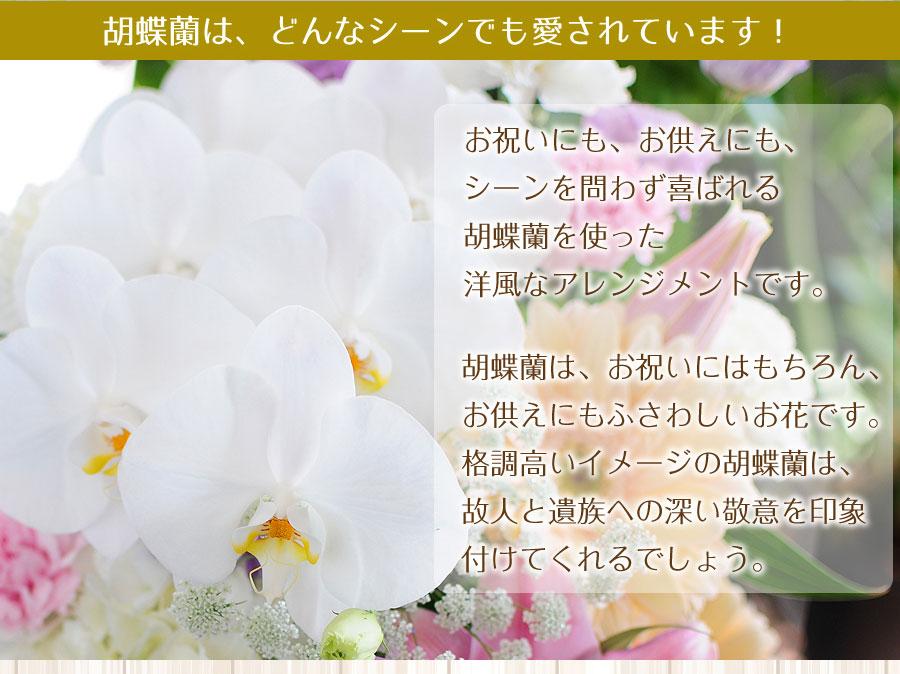 胡蝶蘭は、どんなシーンでも愛されています!