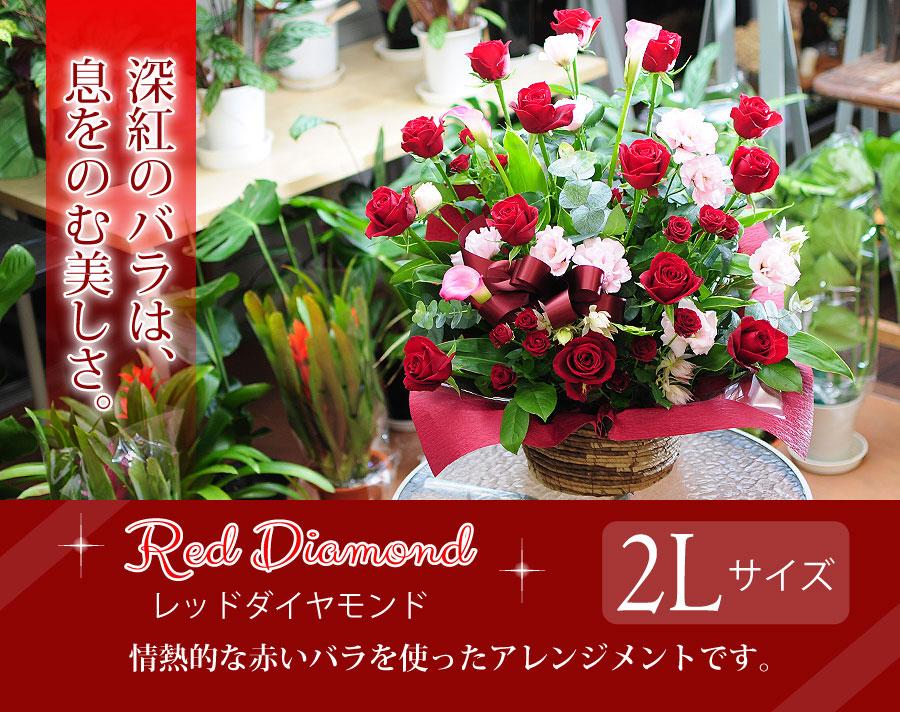 レッドダイヤモンド2Lサイズ