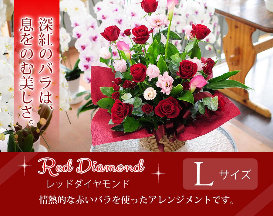 レッドダイヤモンドLサイズ