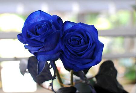 青いバラ、ブルーローズ、ベンデラブルーの花束