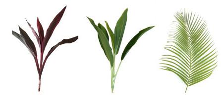 葉物、ドラセナ、ロベ、アレカヤシ