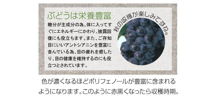 ぶどうの鉢植え スチューベン