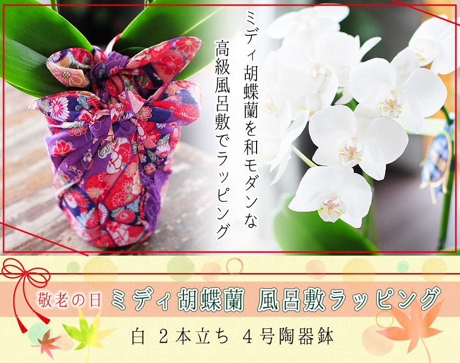 人気の高いミディー胡蝶蘭を和モダンな高級風呂敷でラッピングしました♪