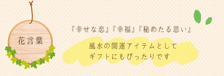 サ花言葉は『幸せな恋』『幸福』『秘めたる思い』