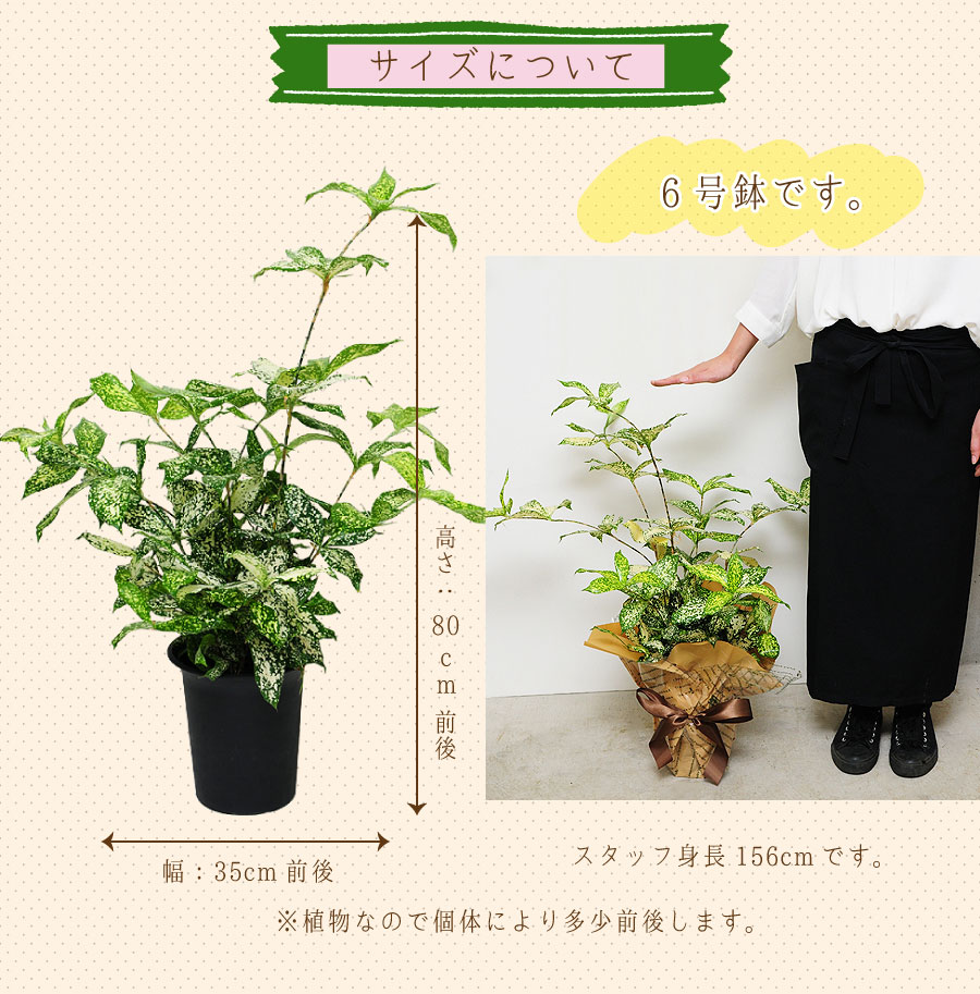 サイズは、高さ:80cm×幅:35cm前後です。