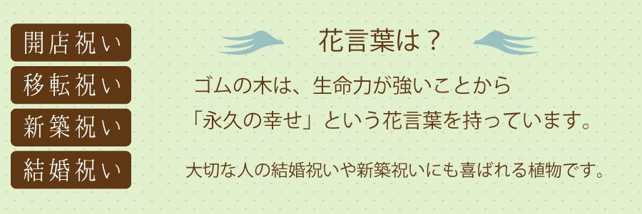 フィカス・バーガンディは、日本人にとってなじみがあり人気の高い観葉植物「ゴムの木」の仲間です。