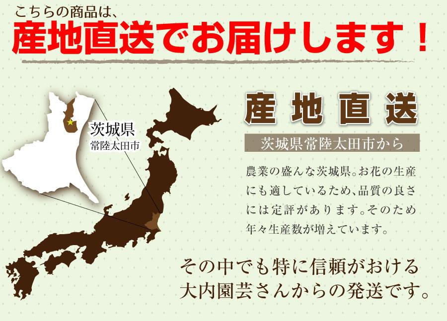 こちらの商品は、茨城県常陸太田市の大内園芸から産地直送でお届けします。