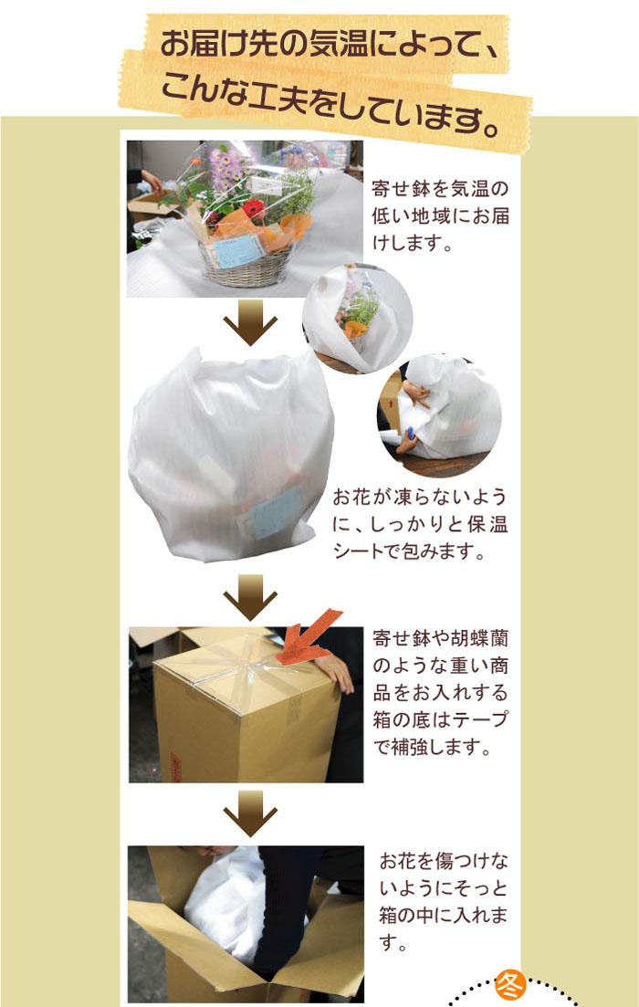 お届け先の気温によって、こんな工夫をしています。寄せ鉢を気温の低い地域にお届けします。お花が凍結しないように、しっかりと保温シートで包みます。寄せ鉢や胡蝶蘭のような想い商品をお入れする箱の底面はテープで補強します。お花を傷つけないようにそっと箱の中に入れます。