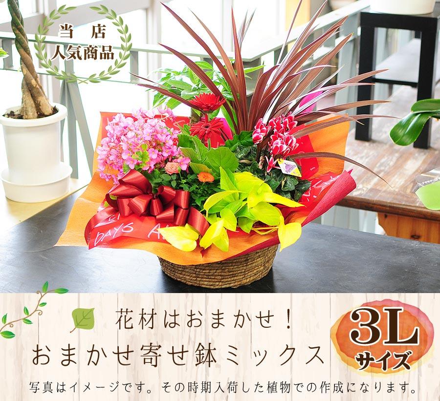 当店人気商品!花材はおまかせ!寄せ鉢ミックスアレンジ