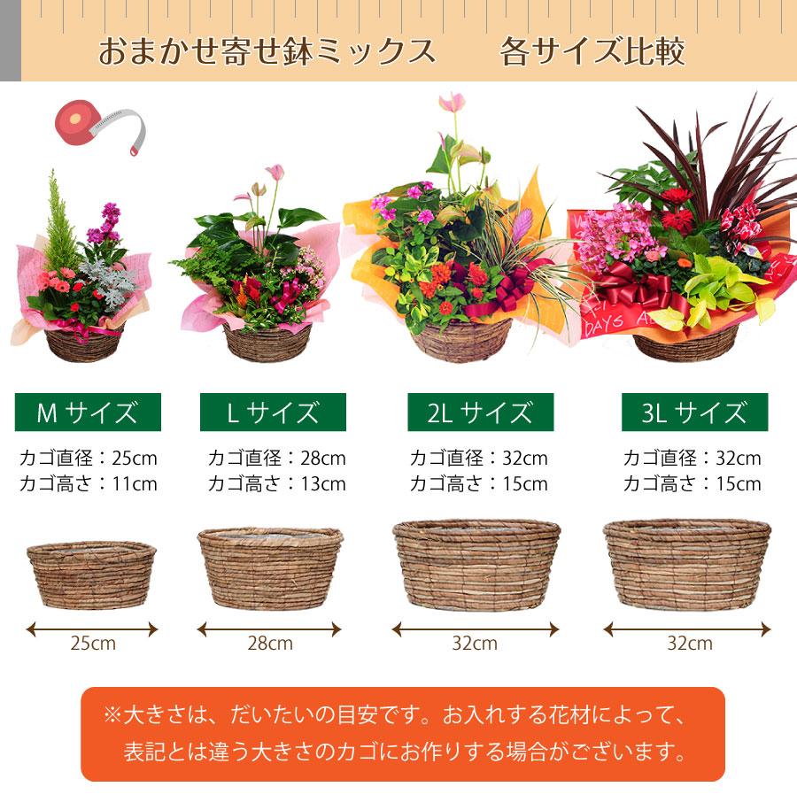 大きさは、だいたいの目安です。お入れする花材によって、表記とは違う大きさのカゴにお作りする場合がございます。