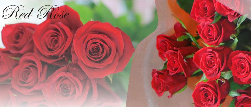赤いバラ(薔薇、ばら)RedRose