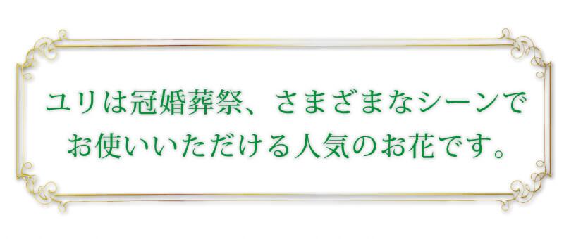 ユリは冠婚葬祭、さまざまなシーンでお使いいただける人気のお花です。