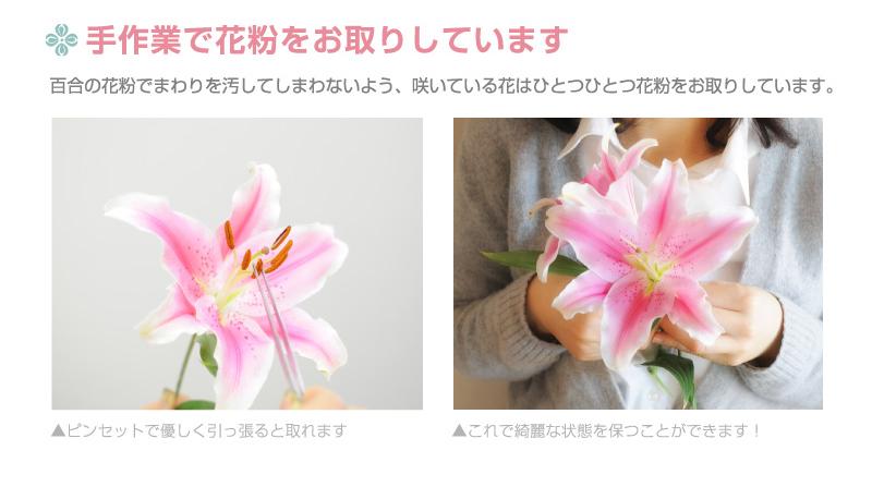 手作業で花粉をお取りしています。百合の花粉でまわりを汚してしまわないよう、咲いている花はひとつひとつ花粉をお取りしています。ピンセットで優しく引っ張ると取れます。これで綺麗な状態を保つことができます!