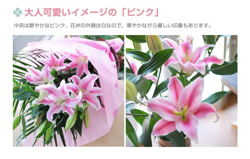 大人可愛いイメージの「ピンク」。中央は華やかなピンん区、花弁の内側は白なので、華やかながら優しい印象もあります。