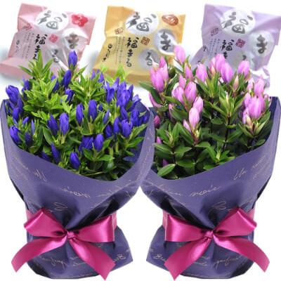 リンドウの鉢花 5号鉢&どら焼き 2つセット